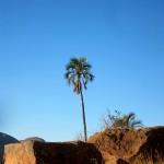 Dans la vie y a des.... palmiers